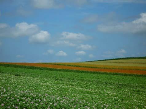 赤麦の丘_f0096216_20853100.jpg