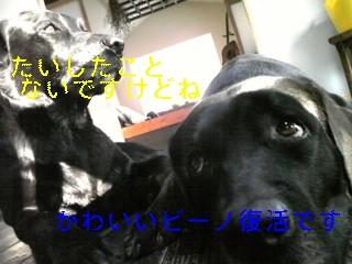 f0148927_15361185.jpg