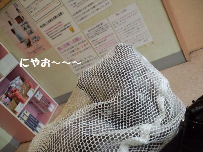 b0127531_17565235.jpg
