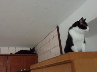 右左右猫 空ろった編。_a0143140_20241562.jpg