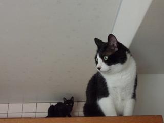 右左右猫 空ろった編。_a0143140_20253315.jpg