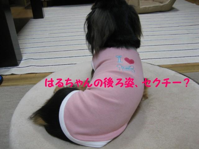 b0160052_1636101.jpg