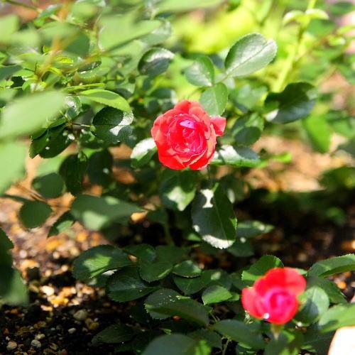 お庭 便り_e0155066_14315936.jpg
