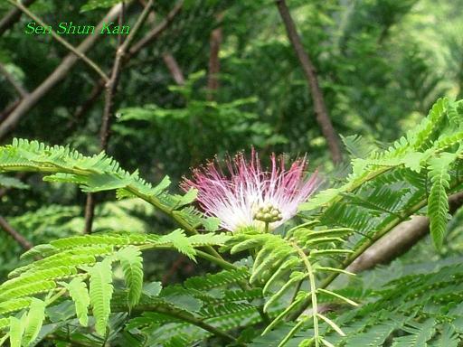山で咲いていた花_a0164068_22301519.jpg