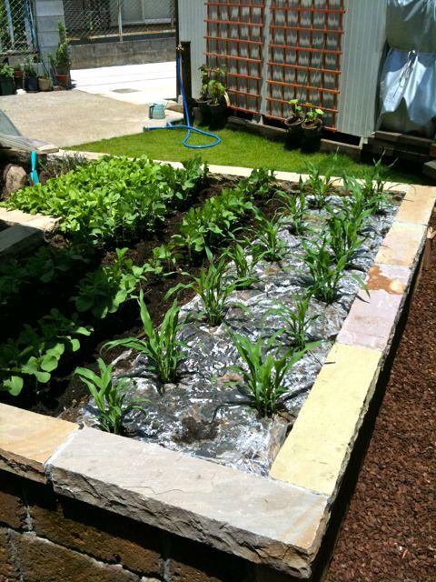 庭の成長_a0148909_20331811.jpg