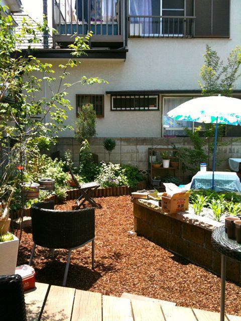 庭の成長_a0148909_20352686.jpg