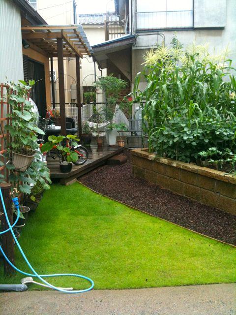 庭の成長_a0148909_20373685.jpg