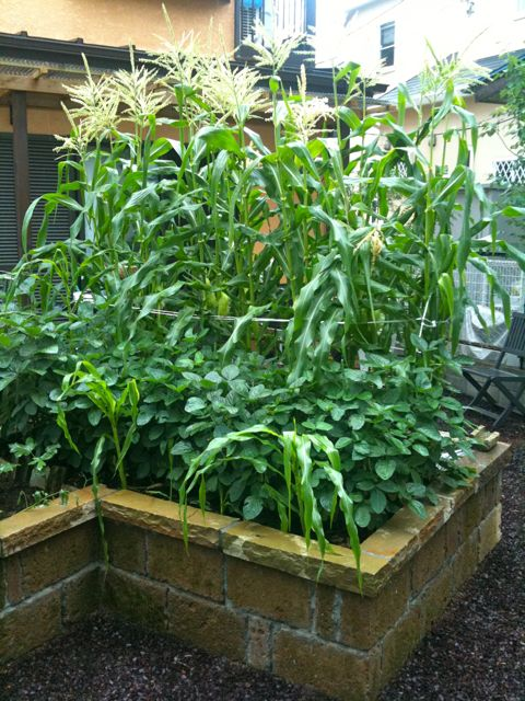 庭の成長_a0148909_20385525.jpg