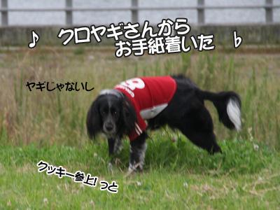 c0166018_1652654.jpg