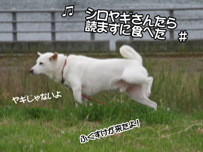 c0166018_1653924.jpg