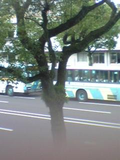 e0119327_12511899.jpg