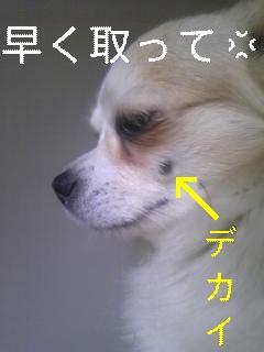 f0148927_1813833.jpg