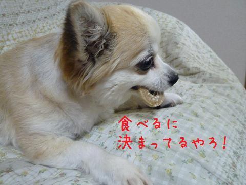 b0138430_2030562.jpg