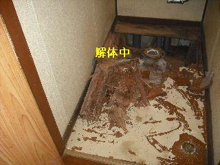 トイレ・白蟻緊急工事_f0031037_21265259.jpg