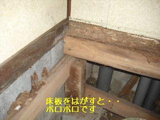 トイレ・白蟻緊急工事_f0031037_2127523.jpg