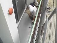 賃貸マンションの外部改修工事10_d0059949_10412691.jpg