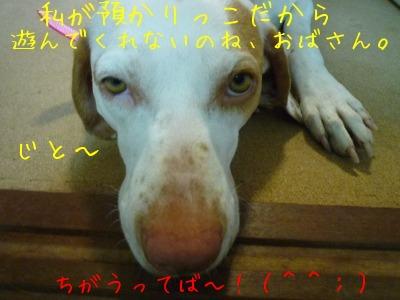 f0177261_136280.jpg