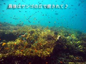 海の中は最高♪体験ダイビング_f0144385_19463334.jpg