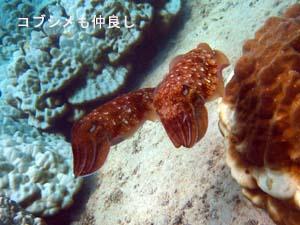 海の中は最高♪体験ダイビング_f0144385_1946935.jpg