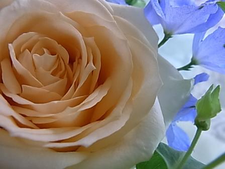 バラとデルフィニウムのブーケ♪_b0105897_2514822.jpg