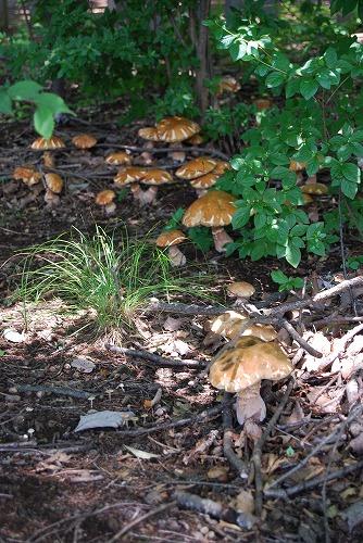 森のキノコ_c0124100_012714.jpg