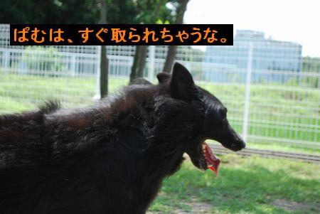f0109202_18435141.jpg