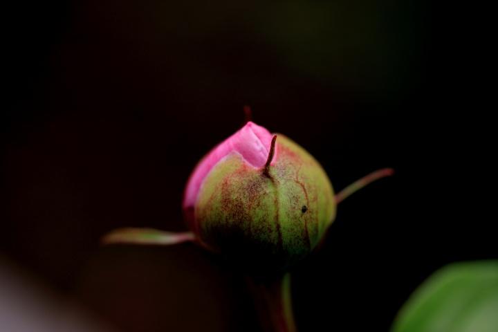 庭の植物_e0169421_2174243.jpg