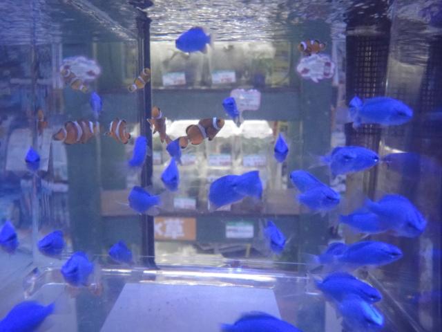海水魚・サンゴ_f0189122_13195520.jpg