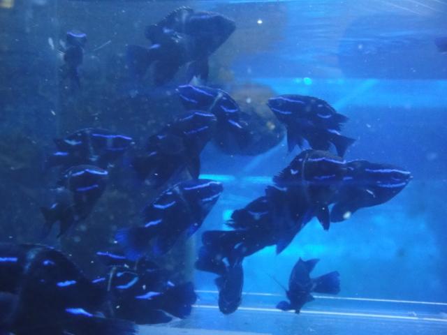 海水魚・サンゴ_f0189122_13214065.jpg