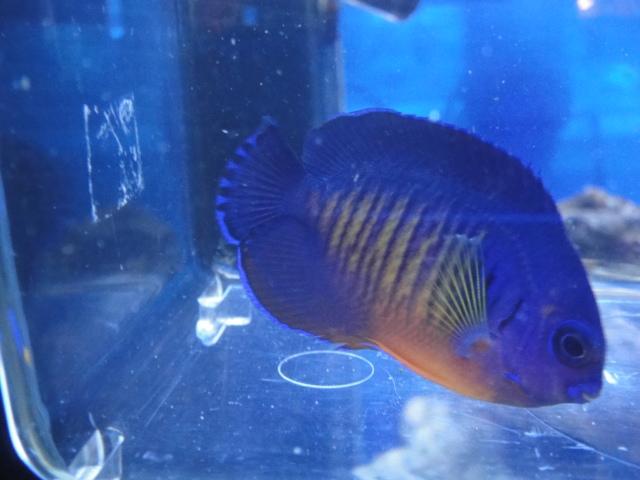 海水魚・サンゴ_f0189122_13223233.jpg