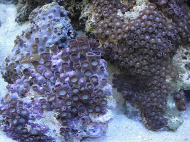 海水魚・サンゴ_f0189122_13253542.jpg
