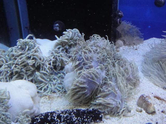 海水魚・サンゴ_f0189122_1326040.jpg