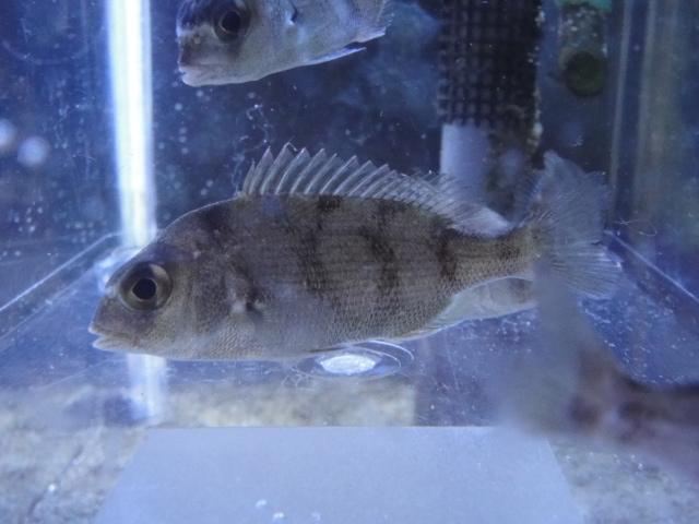 海水魚・サンゴ_f0189122_13263791.jpg