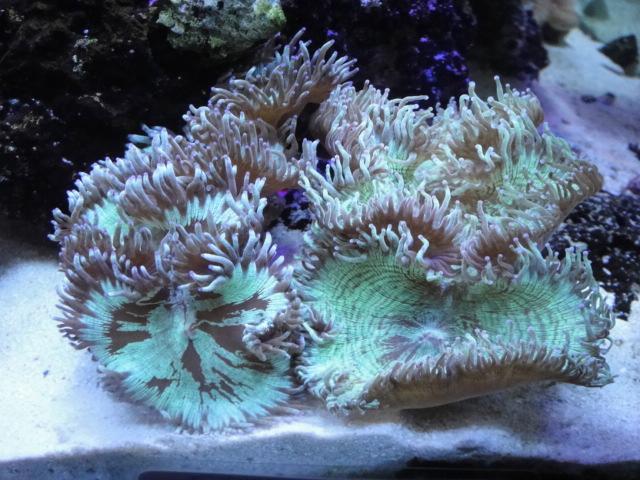 海水魚・サンゴ_f0189122_1853180.jpg