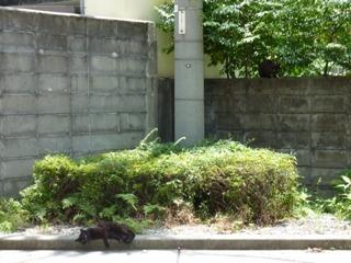 そと猫のお友だち オードリー若林くん春日くん編。_a0143140_0103143.jpg