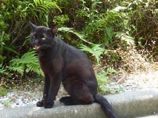 そと猫のお友だち オードリー若林くん春日くん編。_a0143140_0115981.jpg