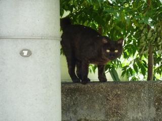 そと猫のお友だち オードリー若林くん春日くん編。_a0143140_014216.jpg
