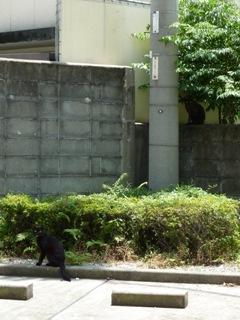 そと猫のお友だち オードリー若林くん春日くん編。_a0143140_095343.jpg