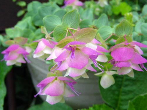 今、咲いている花を少し イトラン? 他_a0136293_1840215.jpg