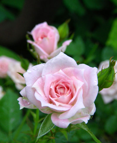今、咲いている花を少し イトラン? 他_a0136293_1841091.jpg
