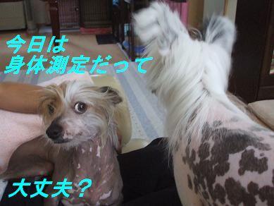f0179203_921240.jpg