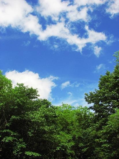 2010年7月15日(木):夏日だったの!?_e0062415_18365871.jpg