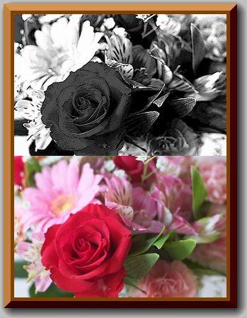 家庭菜園_c0072816_2191595.jpg