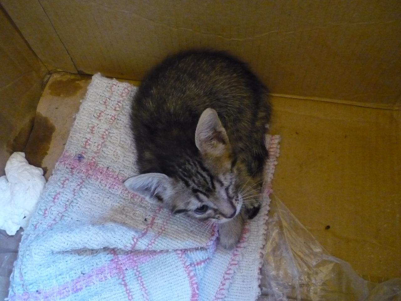 捨て猫 フィオッコ バゥ_d0084229_044069.jpg