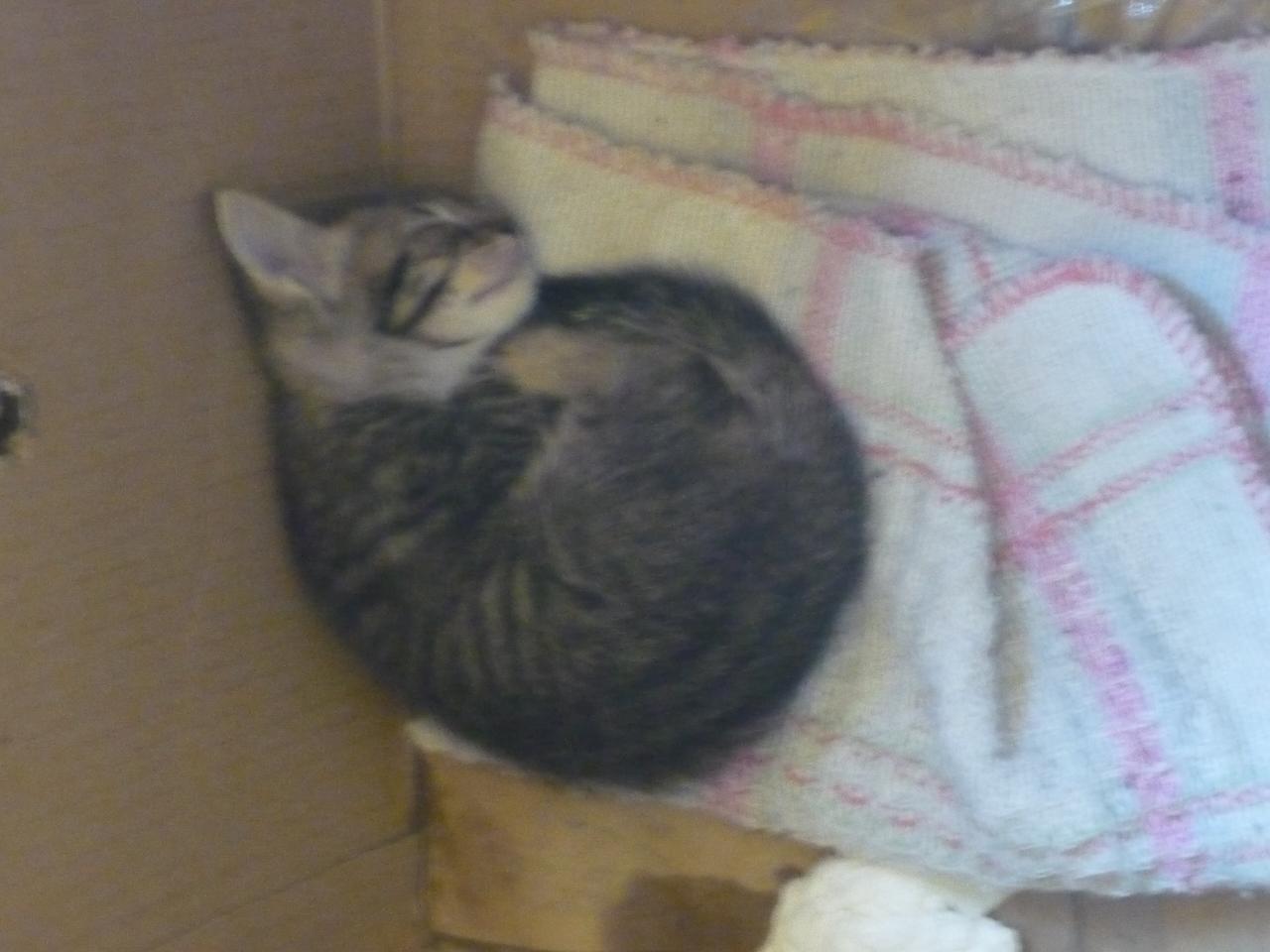 捨て猫 フィオッコ バゥ_d0084229_061023.jpg