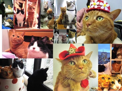 お誕生日猫 しぇる7歳メモリアルプレート編。_a0143140_2155295.jpg