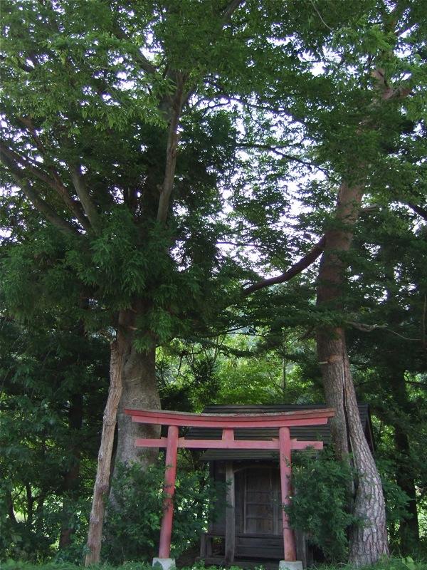 道すがら、謎の神社発見_d0001843_23161451.jpg