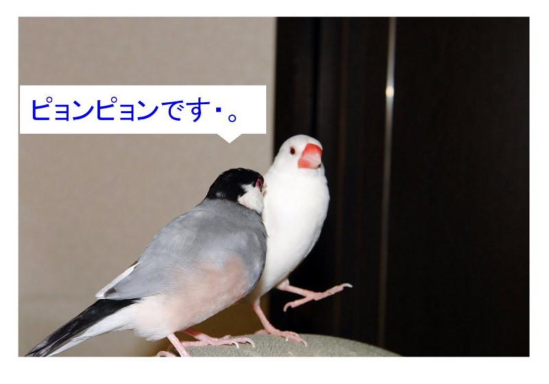 a0019545_16101039.jpg