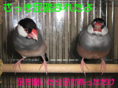 b0158061_2213061.jpg
