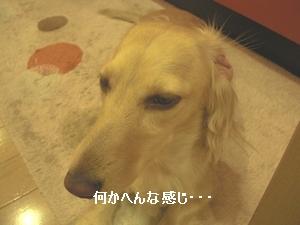 c0198485_1540271.jpg